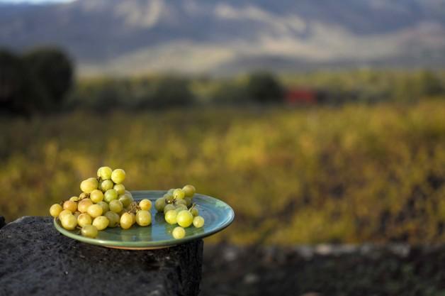 Винодельня Planeta